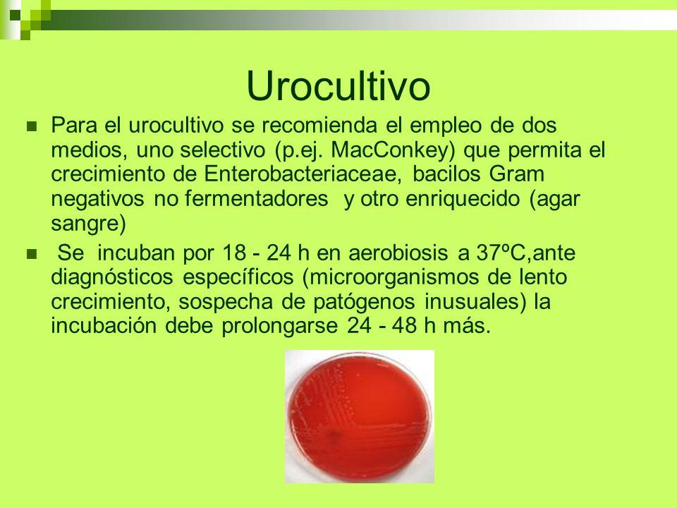 Urocultivo Para el urocultivo se recomienda el empleo de dos medios, uno selectivo (p.ej. MacConkey) que permita el crecimiento de Enterobacteriaceae,