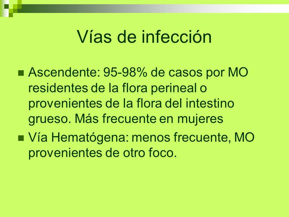 Vías de infección Ascendente: 95-98% de casos por MO residentes de la flora perineal o provenientes de la flora del intestino grueso. Más frecuente en