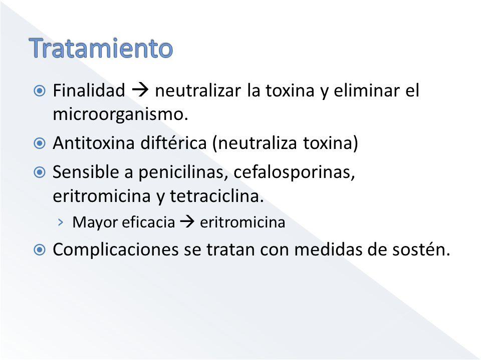 Finalidad neutralizar la toxina y eliminar el microorganismo. Antitoxina diftérica (neutraliza toxina) Sensible a penicilinas, cefalosporinas, eritrom