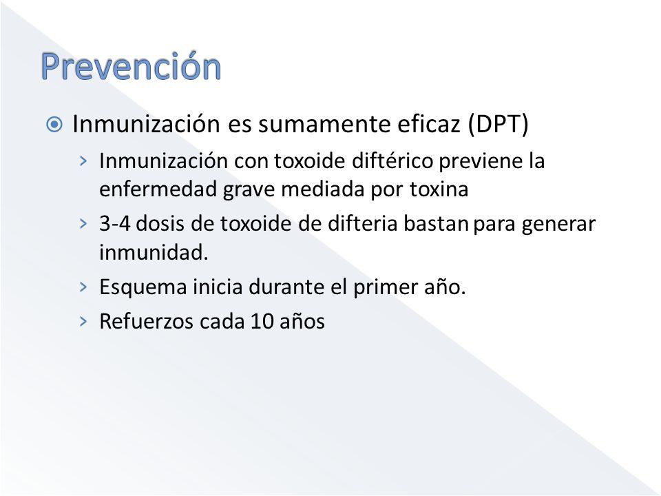 Inmunización es sumamente eficaz (DPT) Inmunización con toxoide diftérico previene la enfermedad grave mediada por toxina 3-4 dosis de toxoide de difteria bastan para generar inmunidad.