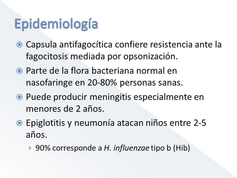Capsula antifagocítica confiere resistencia ante la fagocitosis mediada por opsonización. Parte de la flora bacteriana normal en nasofaringe en 20-80%