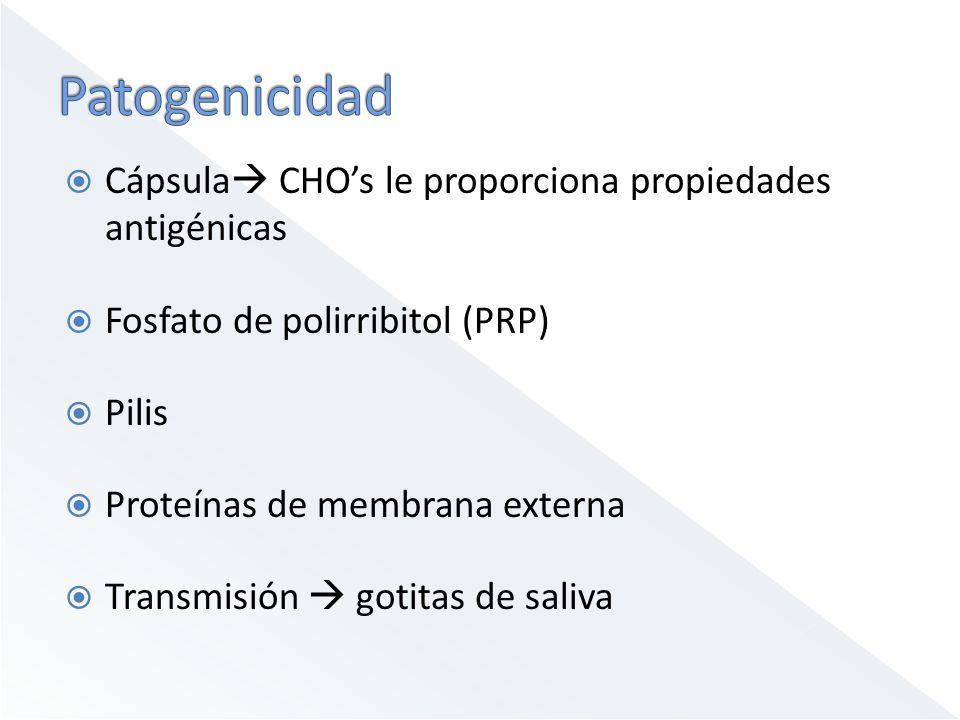 Cápsula CHOs le proporciona propiedades antigénicas Fosfato de polirribitol (PRP) Pilis Proteínas de membrana externa Transmisión gotitas de saliva