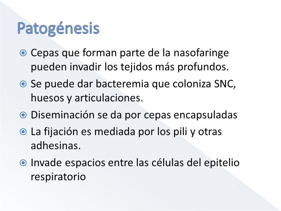 Cepas que forman parte de la nasofaringe pueden invadir los tejidos más profundos.