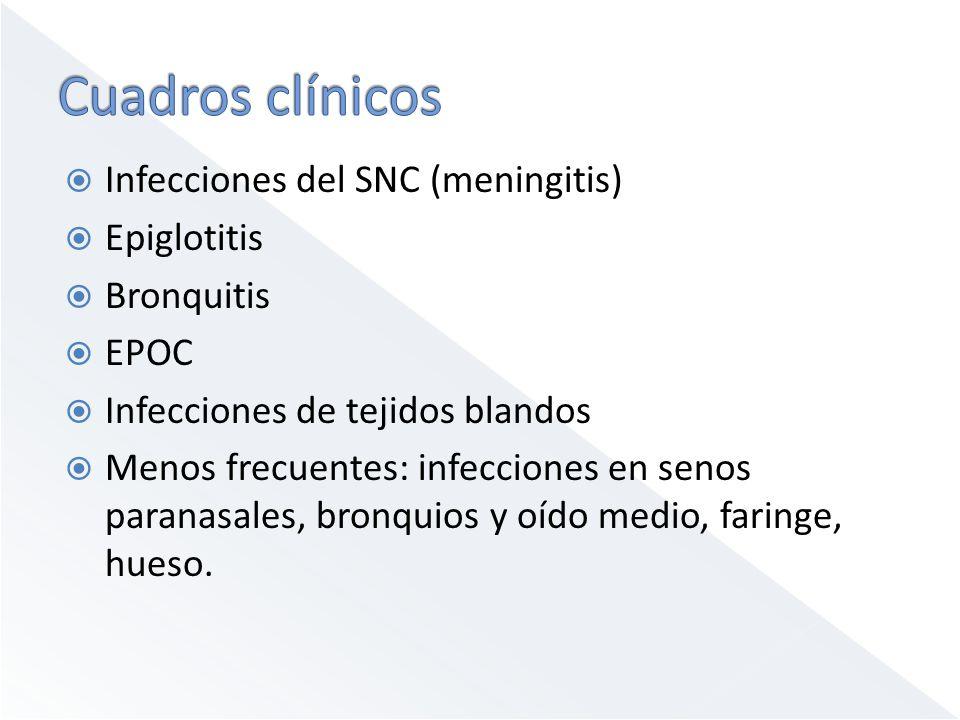 Infecciones del SNC (meningitis) Epiglotitis Bronquitis EPOC Infecciones de tejidos blandos Menos frecuentes: infecciones en senos paranasales, bronqu