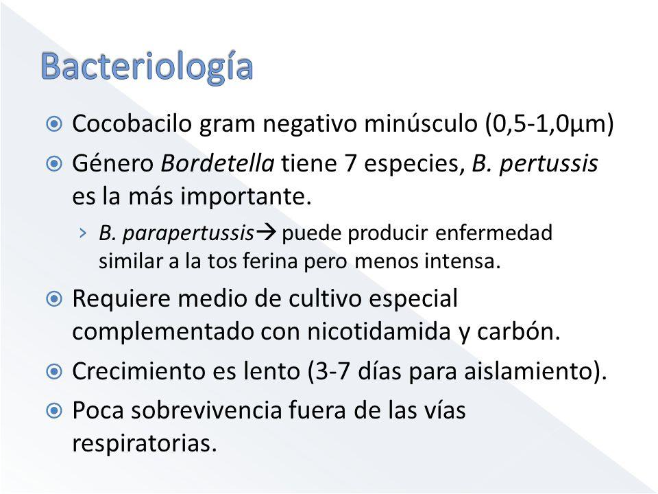 Cocobacilo gram negativo minúsculo (0,5-1,0μm) Género Bordetella tiene 7 especies, B. pertussis es la más importante. B. parapertussis puede producir