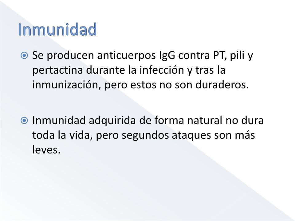 Se producen anticuerpos IgG contra PT, pili y pertactina durante la infección y tras la inmunización, pero estos no son duraderos.