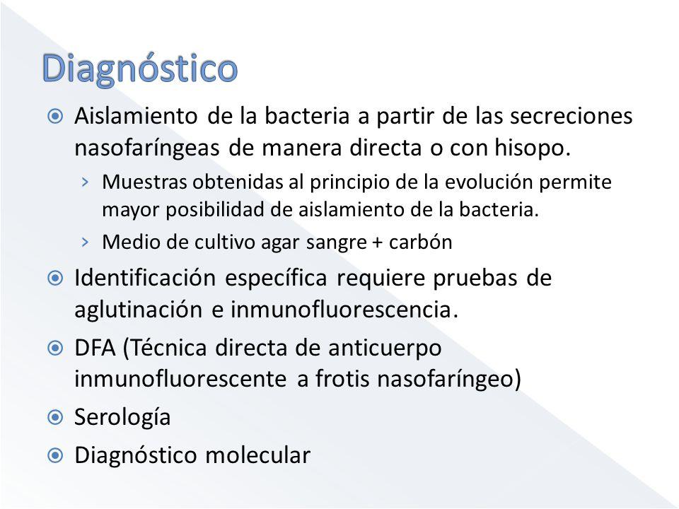 Aislamiento de la bacteria a partir de las secreciones nasofaríngeas de manera directa o con hisopo. Muestras obtenidas al principio de la evolución p