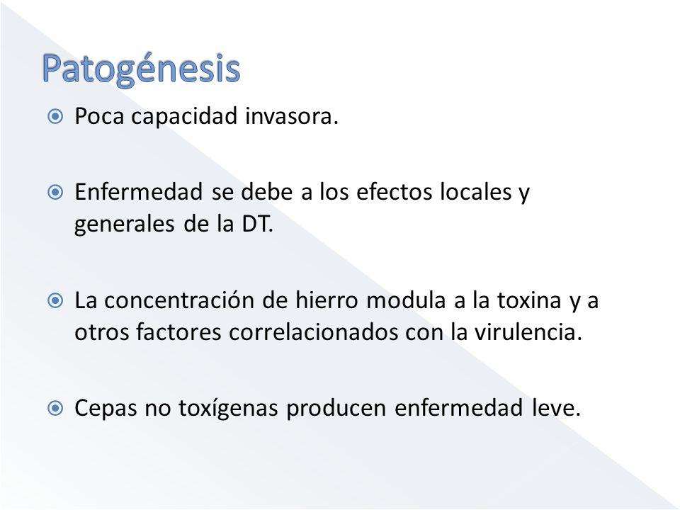 Poca capacidad invasora. Enfermedad se debe a los efectos locales y generales de la DT. La concentración de hierro modula a la toxina y a otros factor