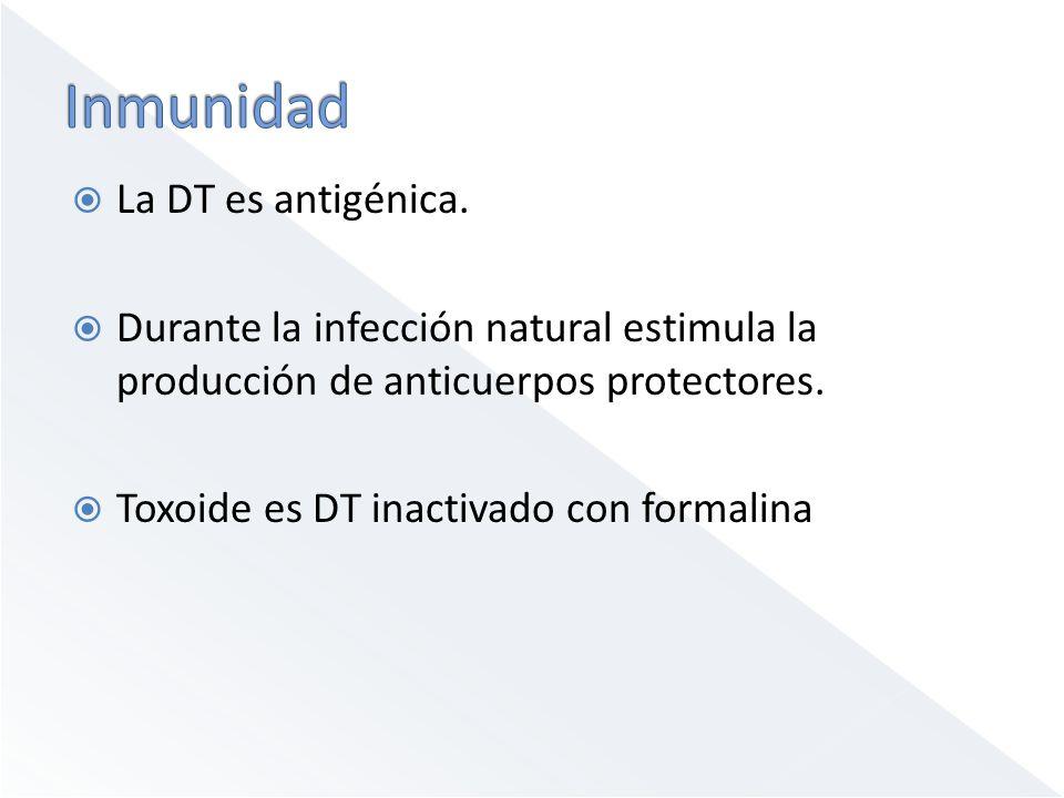 La DT es antigénica. Durante la infección natural estimula la producción de anticuerpos protectores. Toxoide es DT inactivado con formalina