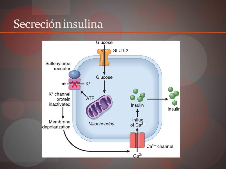 Receptores insulina