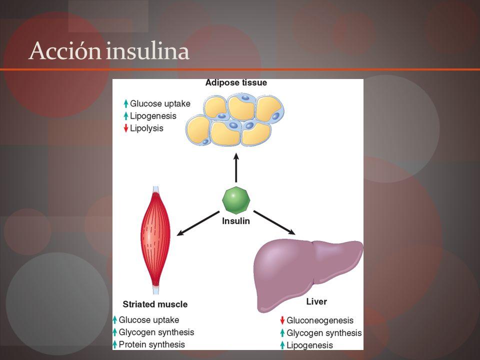 Secreción Insulina Basal 1 UI/h Mantiene cifras glucosa normales Prandial Bifásica