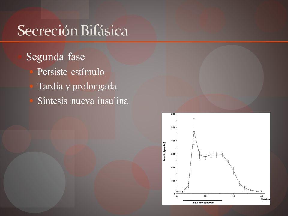 DIABETES MELLITUS Fisiopatología