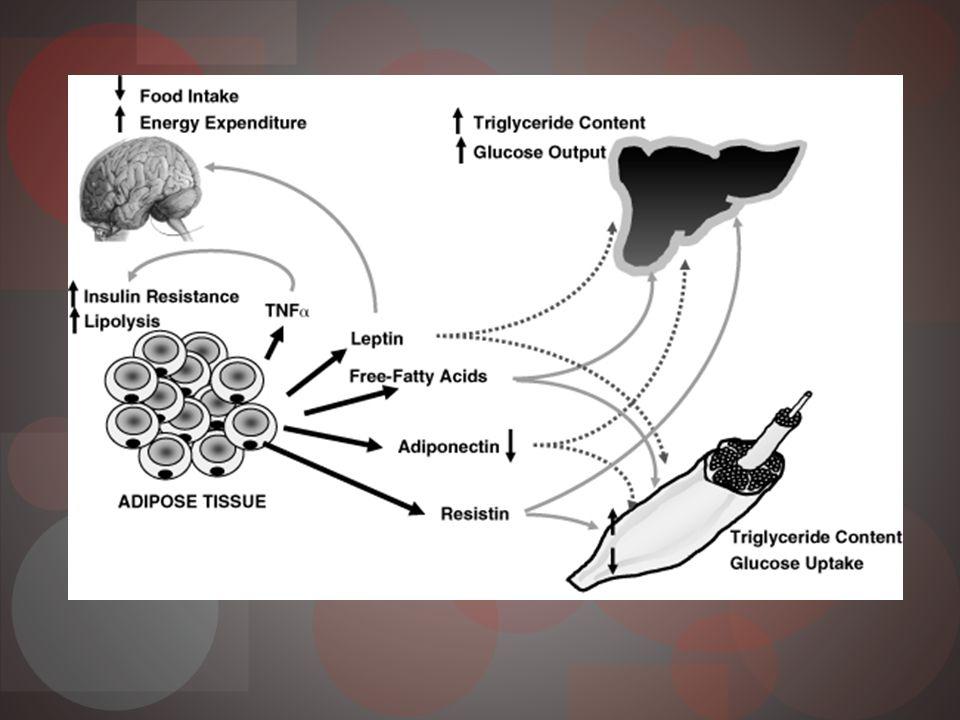 Obesidad Más 80% DM2 tienen sobrepeso u obesidad Asociación entre obesidad y resistencia insulina Principalmente obesidad central Lipolíticamente más activa Resistente acción antilipolítica de la insulina Incremento actividad LPL Niveles alto 11 β-hidroxiesteroide dehidrogenasa