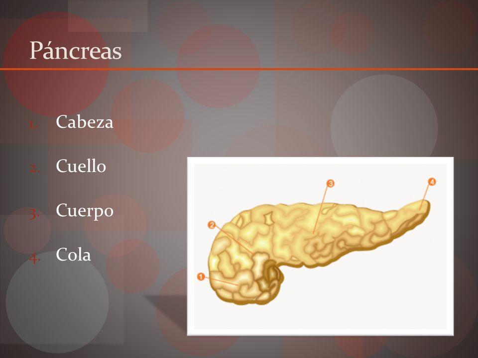 Histología Sistema ductal Acinos Islotes de Langerhans
