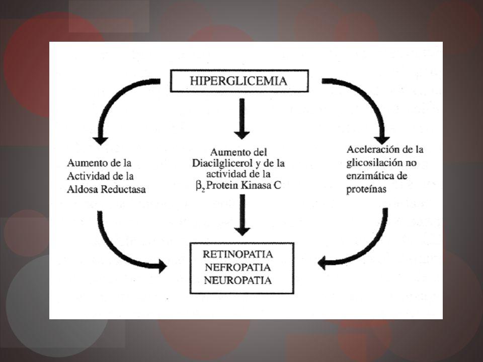 Glucosilación no enzimática proteínas Hiperglicemia interactúa con proteínas Productos avanzados de la glucosilación Acumulan en pared vascular Señales proinflamatorias y proateroesclerosas Alteración hemodinamia Daño células endoteliales