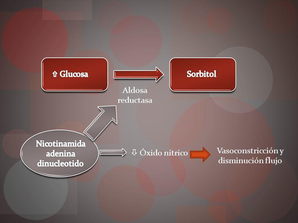 Factores crecimiento Ante isquemia retina Factor crecimiento endotelial vascular Factor crecimiento fibroblastico Factor crecimiento vascular IGF1 Hormona crecimiento
