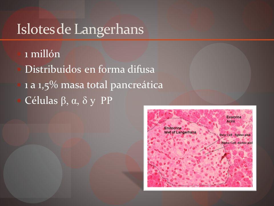 Islotes de Langerhans Célula%SecreciónAcción β70 – 80 Insulina Amilina Glucosa Glucagón y apetito α20Glucagón Glucosa δ3 – 5SomatostatinaControla péptidos TGI PP1 – 2Polipéptido pancreáticoNo bien conocido