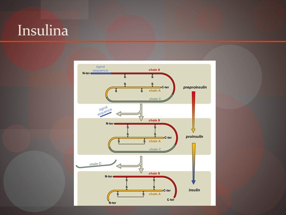 Dos cadenas polipéptidos Cadena A 21 a.a. Cadena B 30 a.a. Conectadas por puentes disulfuro