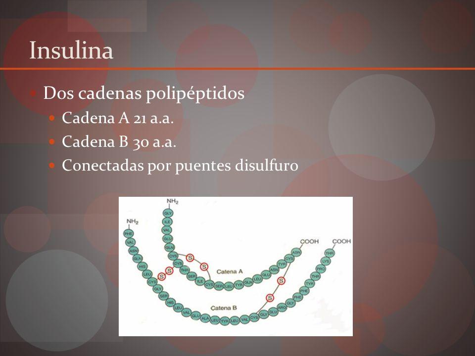 Secreción insulina