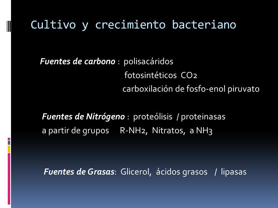 Cultivo y crecimiento bacteriano Fuentes de carbono : polisacáridos fotosintéticos CO2 carboxilación de fosfo-enol piruvato Fuentes de Nitrógeno : pro