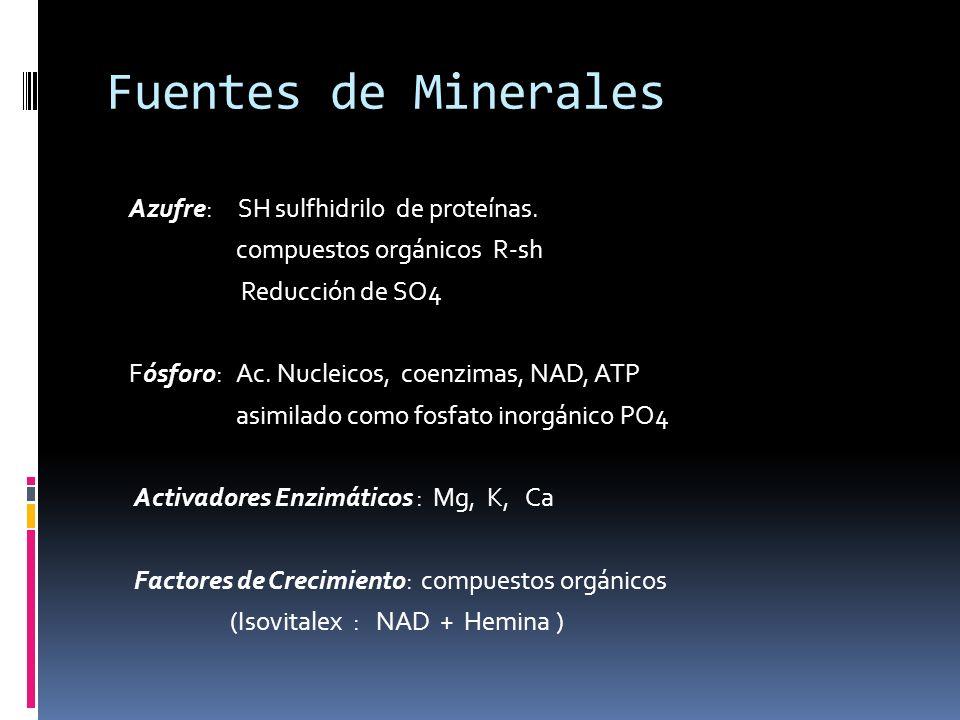 Fuentes de Minerales Azufre: SH sulfhidrilo de proteínas. compuestos orgánicos R-sh Reducción de SO4 Fósforo: Ac. Nucleicos, coenzimas, NAD, ATP asimi
