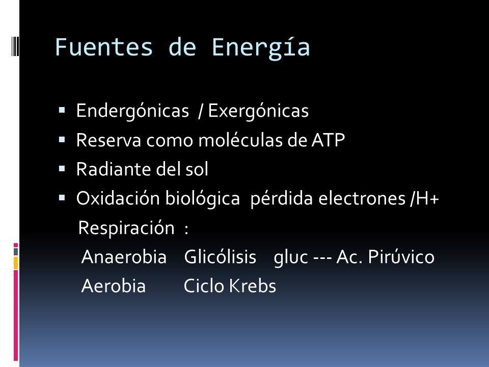 Fuentes de Energía Endergónicas / Exergónicas Reserva como moléculas de ATP Radiante del sol Oxidación biológica pérdida electrones /H+ Respiración :