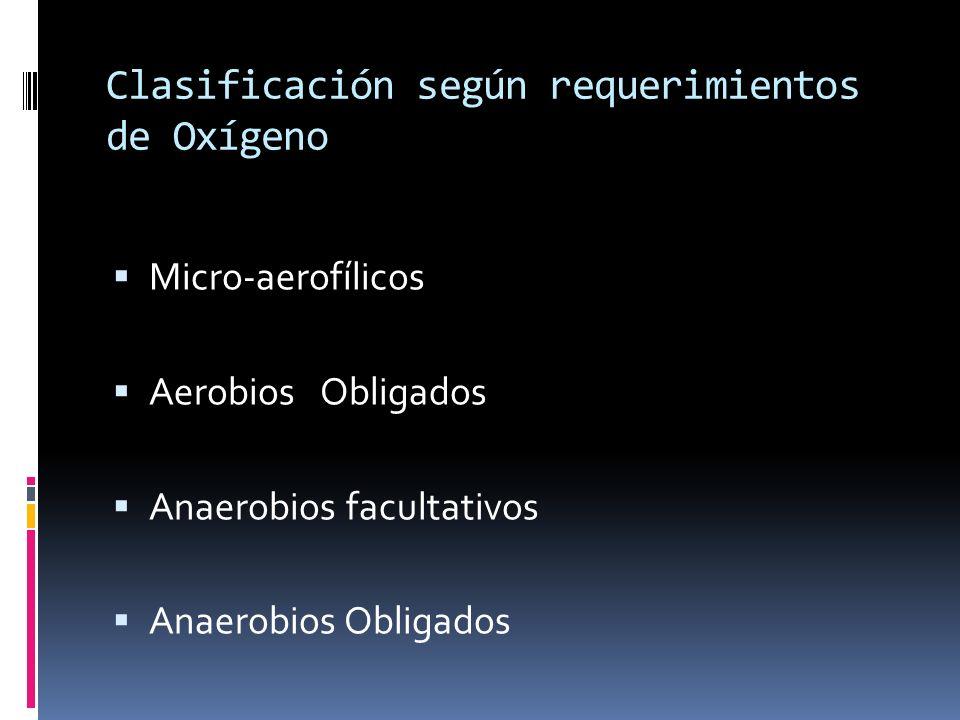 Clasificación según requerimientos de Oxígeno Micro-aerofílicos Aerobios Obligados Anaerobios facultativos Anaerobios Obligados