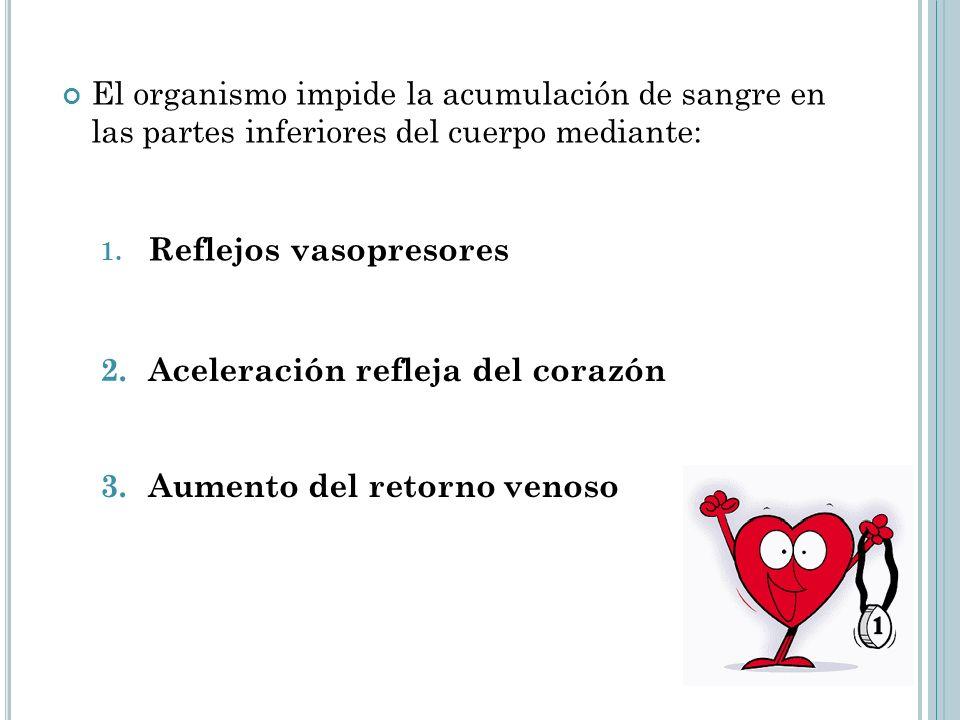 El organismo impide la acumulación de sangre en las partes inferiores del cuerpo mediante: 1. Reflejos vasopresores 2. Aceleración refleja del corazón