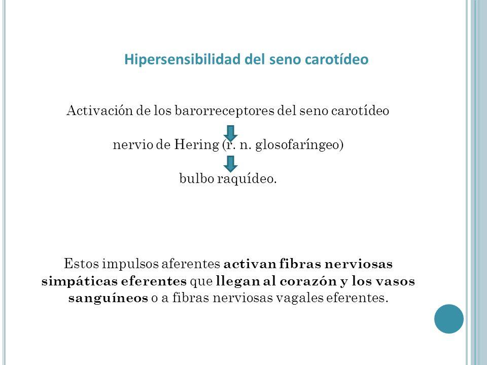 Activación de los barorreceptores del seno carotídeo nervio de Hering (r. n. glosofaríngeo) bulbo raquídeo. Estos impulsos aferentes activan fibras ne