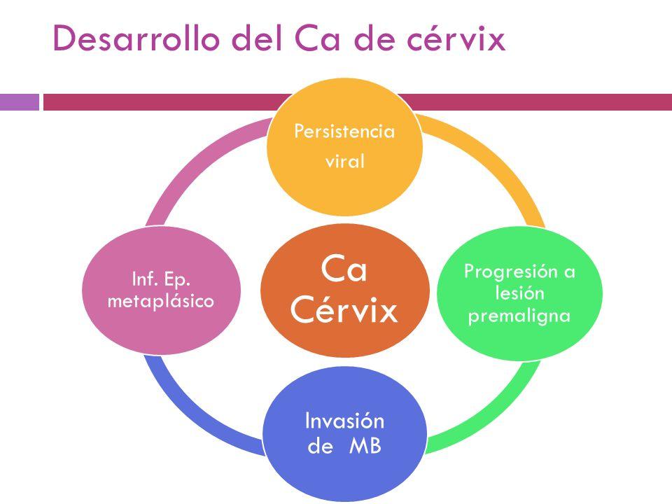 Desarrollo del Ca de cérvix Ca Cérvix Persistencia viral Progresión a lesión premaligna Invasión de MB Inf. Ep. metaplásico