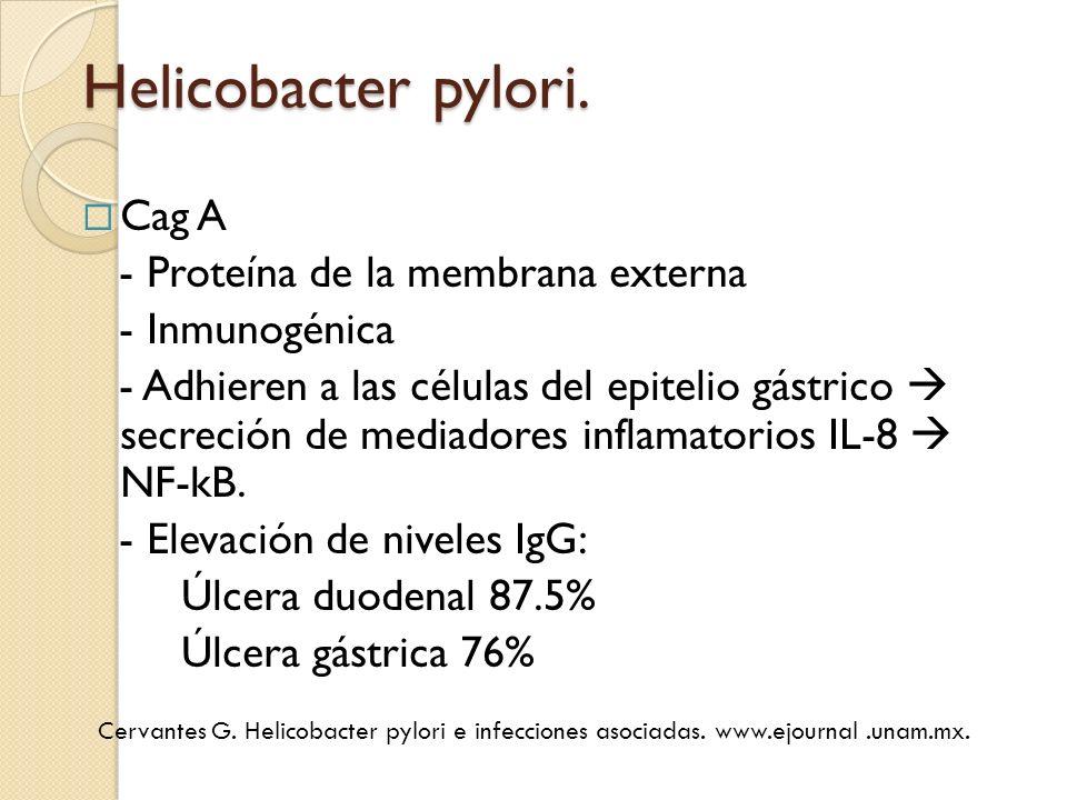 Helicobacter pylori. Cag A - Proteína de la membrana externa - Inmunogénica - Adhieren a las células del epitelio gástrico secreción de mediadores inf