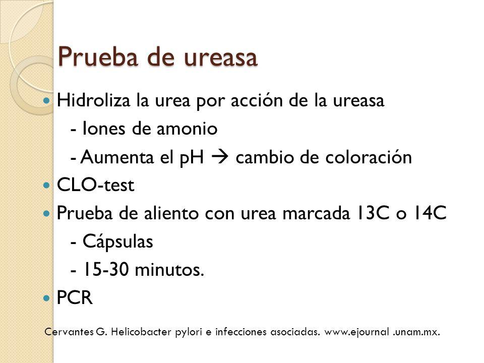 Prueba de ureasa Hidroliza la urea por acción de la ureasa - Iones de amonio - Aumenta el pH cambio de coloración CLO-test Prueba de aliento con urea