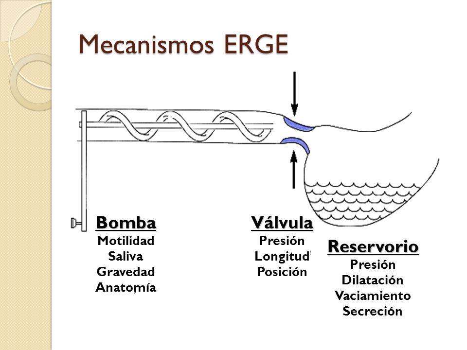 Mecanismos ERGE Bomba Motilidad Saliva Gravedad Anatomía Válvula Presión Longitud Posición Reservorio Presión Dilatación Vaciamiento Secreción
