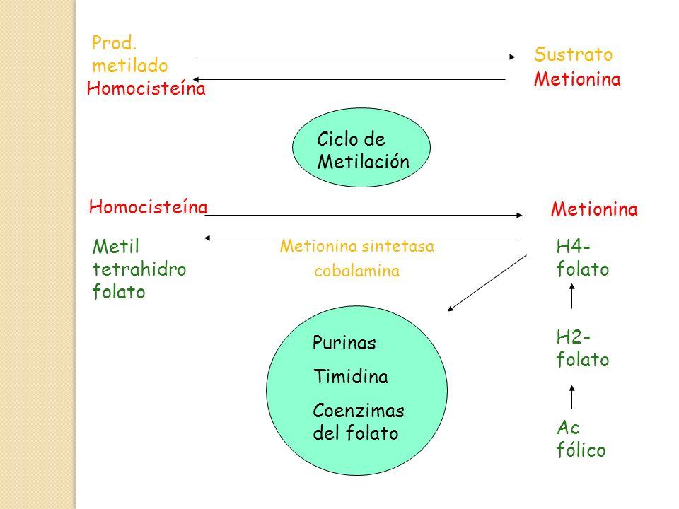 Prod. metilado Sustrato Metionina Ciclo de Metilación Homocisteína Metionina Metil tetrahidro folato Metionina sintetasa cobalamina H4- folato H2- fol