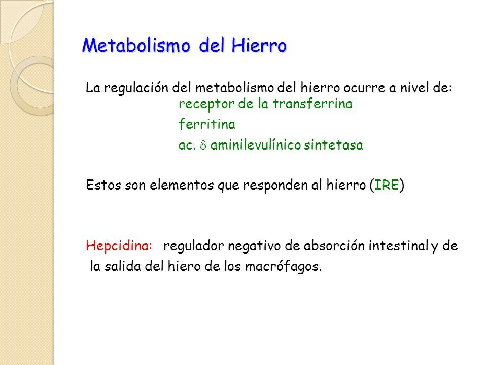 Metabolismo del Hierro La regulación del metabolismo del hierro ocurre a nivel de: receptor de la transferrina ferritina ac. aminilevulínico sintetasa