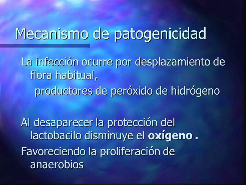 Mecanismo de patogenicidad La infección ocurre por desplazamiento de flora habitual, productores de peróxido de hidrógeno productores de peróxido de h