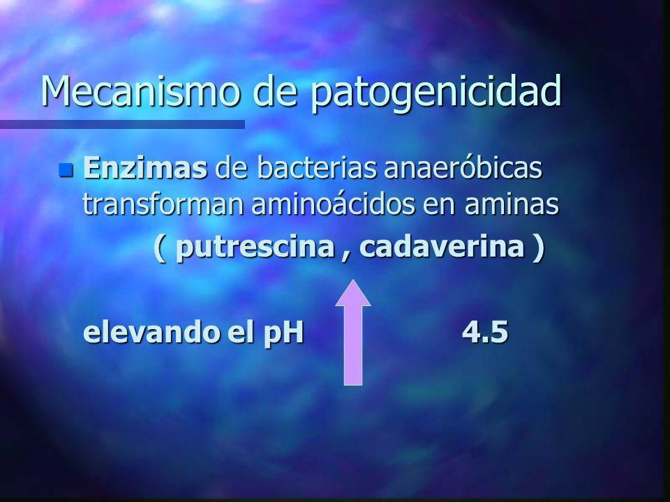Mecanismo de patogenicidad n Enzimas de bacterias anaeróbicas transforman aminoácidos en aminas ( putrescina, cadaverina ) ( putrescina, cadaverina )
