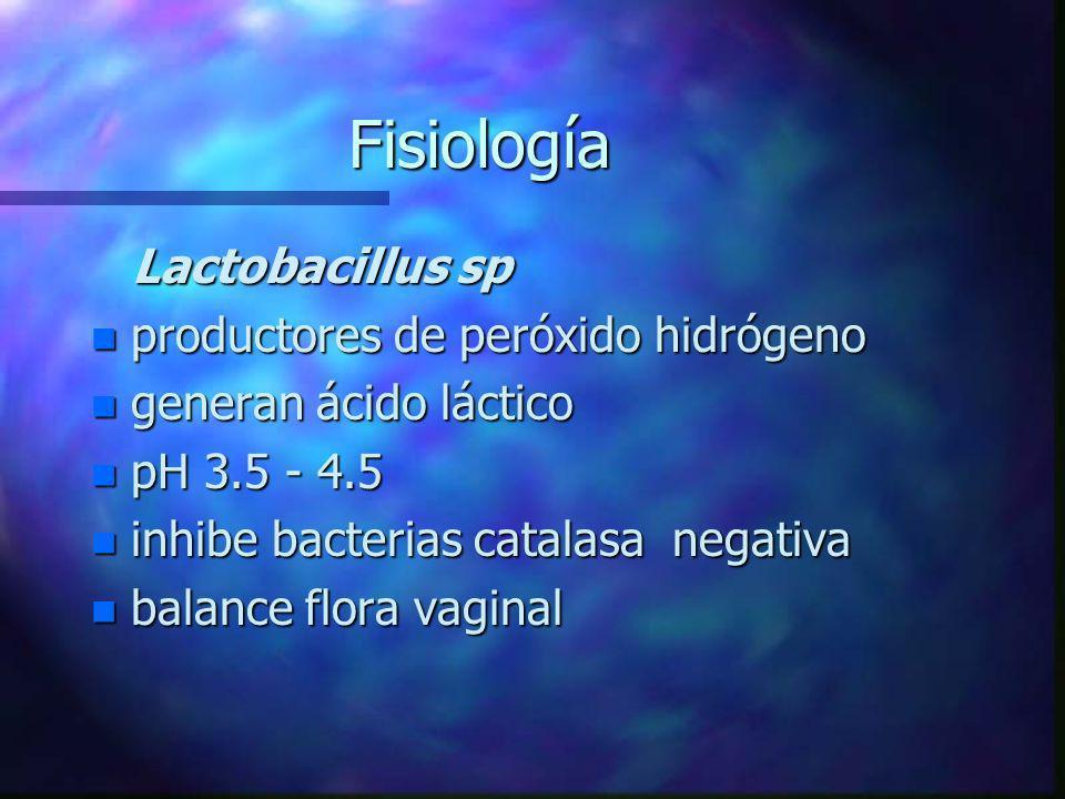 Fisiología Lactobacillus sp Lactobacillus sp n productores de peróxido hidrógeno n generan ácido láctico n pH 3.5 - 4.5 n inhibe bacterias catalasa ne
