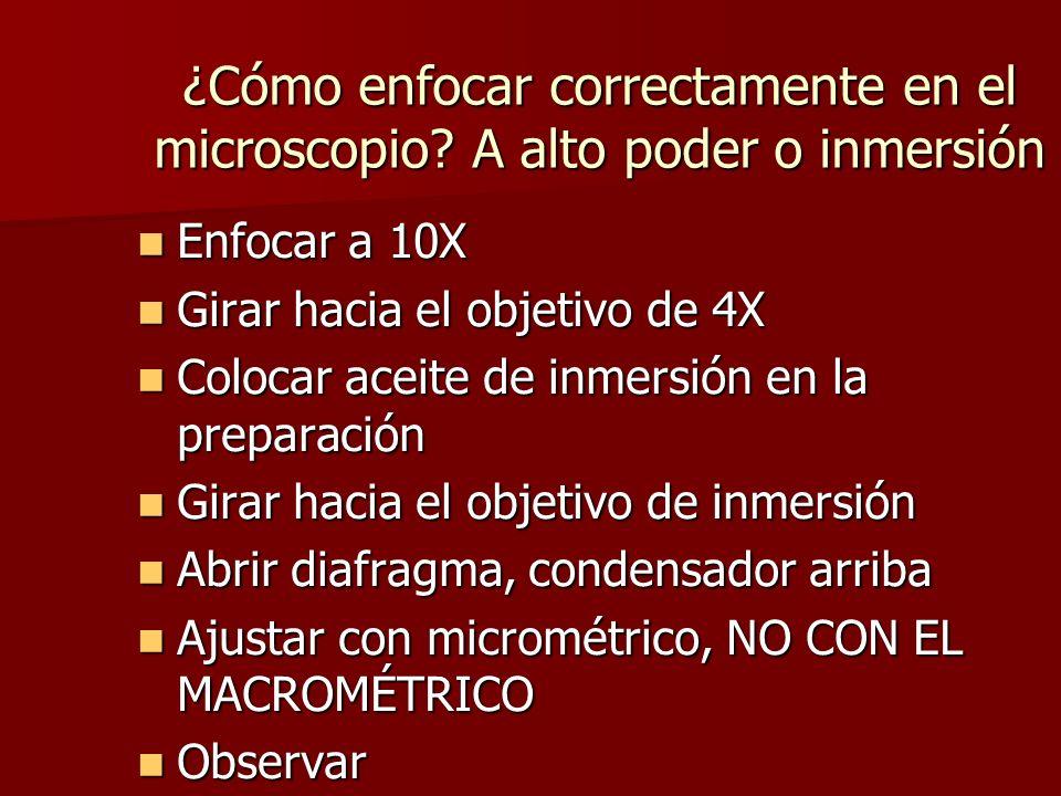 ¿Cómo enfocar correctamente en el microscopio? A alto poder o inmersión Enfocar a 10X Enfocar a 10X Girar hacia el objetivo de 4X Girar hacia el objet