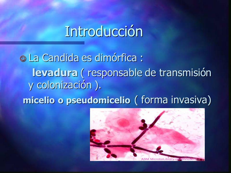 Candidiasis vaginal Introducción J Es la causa más frecuente de infección genital en el mundo. J Se presenta con mayor frecuencia en zonas de clima cá