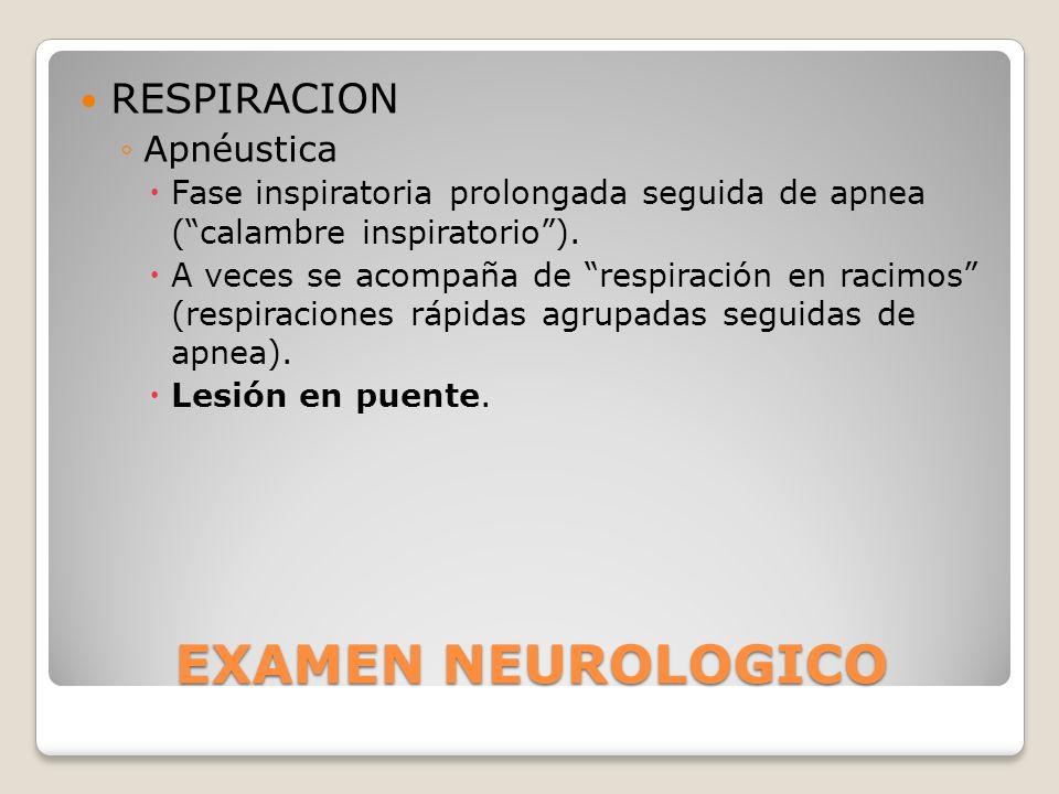 EXAMEN NEUROLOGICO RESPIRACION Apnéustica Fase inspiratoria prolongada seguida de apnea (calambre inspiratorio). A veces se acompaña de respiración en