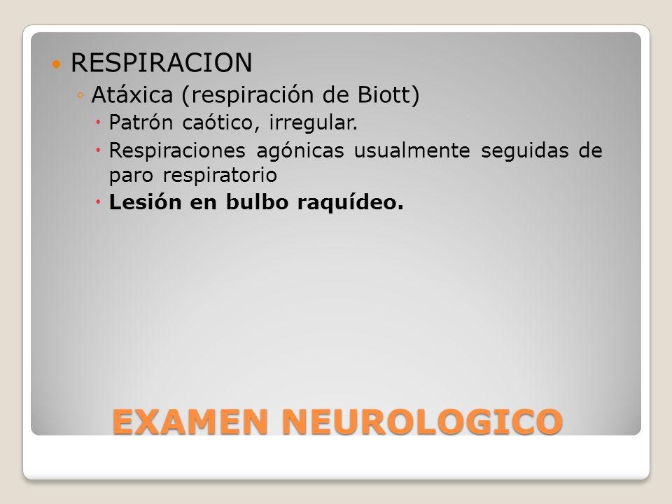 EXAMEN NEUROLOGICO RESPIRACION Atáxica (respiración de Biott) Patrón caótico, irregular. Respiraciones agónicas usualmente seguidas de paro respirator