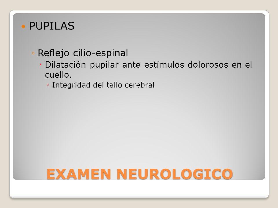 EXAMEN NEUROLOGICO PUPILAS Reflejo cilio-espinal Dilatación pupilar ante estímulos dolorosos en el cuello. Integridad del tallo cerebral