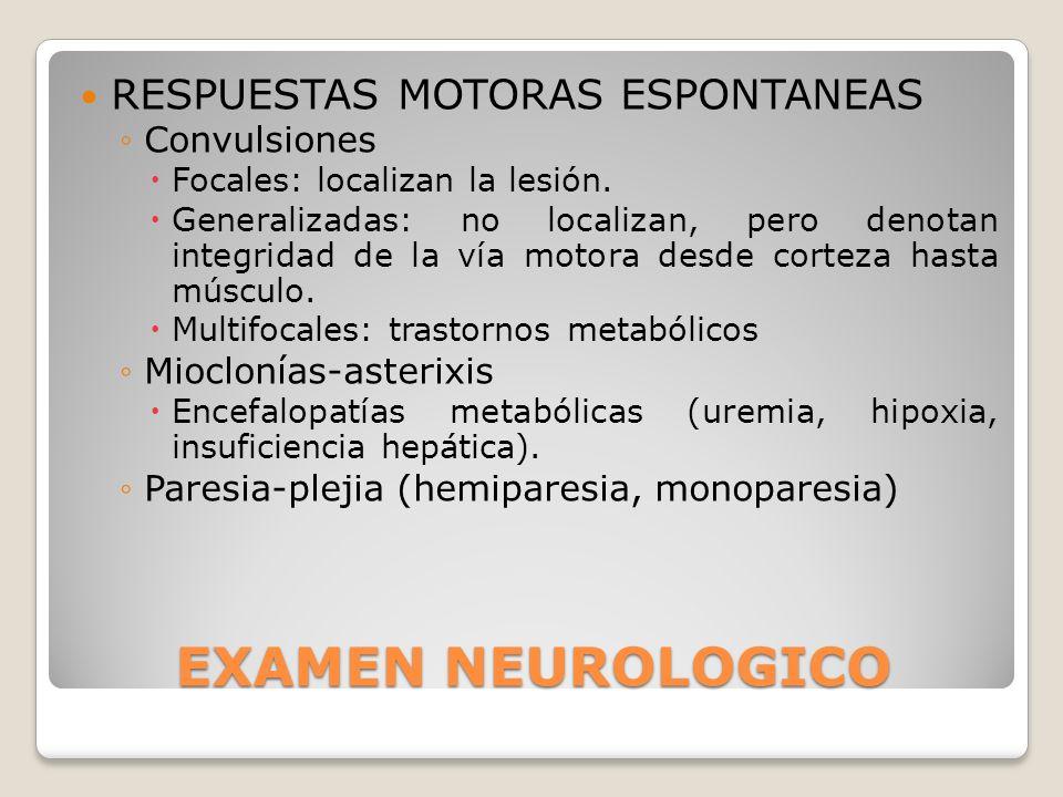 EXAMEN NEUROLOGICO RESPUESTAS MOTORAS ESPONTANEAS Convulsiones Focales: localizan la lesión. Generalizadas: no localizan, pero denotan integridad de l