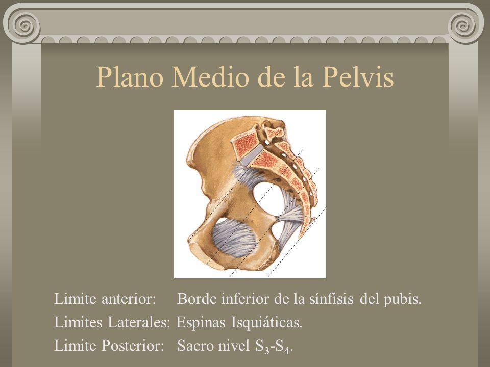 Plano Medio de la Pelvis Limite anterior: Borde inferior de la sínfisis del pubis. Limites Laterales: Espinas Isquiáticas. Limite Posterior: Sacro niv