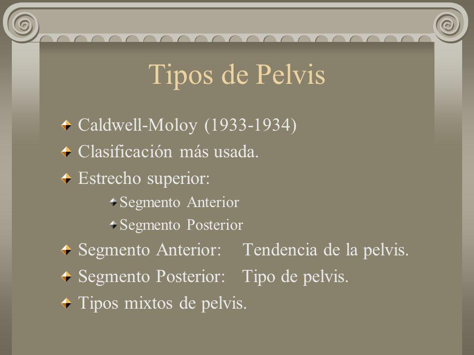 Tipos de Pelvis Caldwell-Moloy (1933-1934) Clasificación más usada. Estrecho superior: Segmento Anterior Segmento Posterior Segmento Anterior: Tendenc