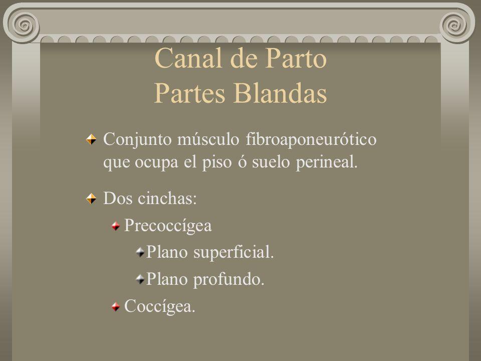 Canal de Parto Partes Blandas Conjunto músculo fibroaponeurótico que ocupa el piso ó suelo perineal. Dos cinchas: Precoccígea Plano superficial. Plano