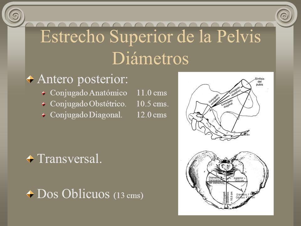 Estrecho Superior de la Pelvis Diámetros Antero posterior: Conjugado Anatómico 11.0 cms Conjugado Obstétrico. 10.5 cms. Conjugado Diagonal. 12.0 cms T