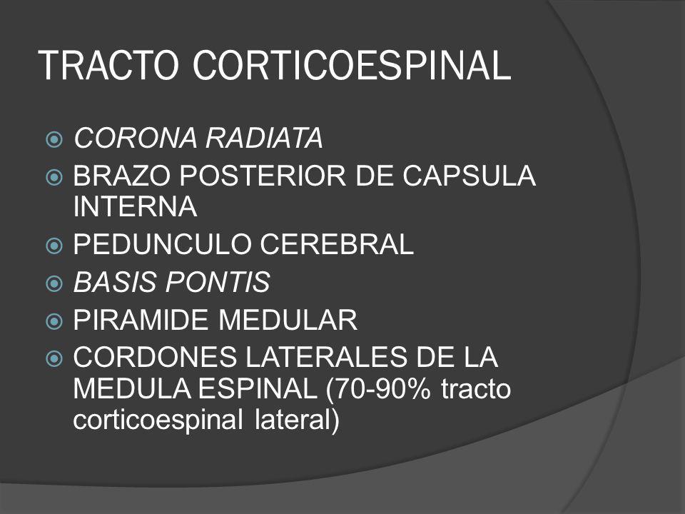 TRACTO CORTICOESPINAL CORONA RADIATA BRAZO POSTERIOR DE CAPSULA INTERNA PEDUNCULO CEREBRAL BASIS PONTIS PIRAMIDE MEDULAR CORDONES LATERALES DE LA MEDU