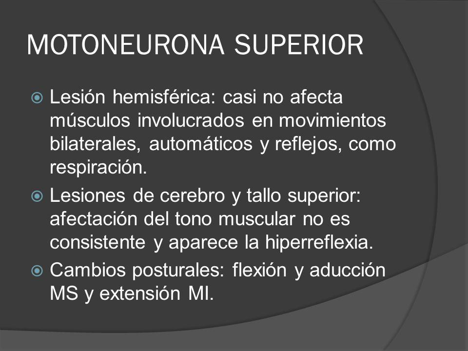 MOTONEURONA SUPERIOR Lesión hemisférica: casi no afecta músculos involucrados en movimientos bilaterales, automáticos y reflejos, como respiración. Le